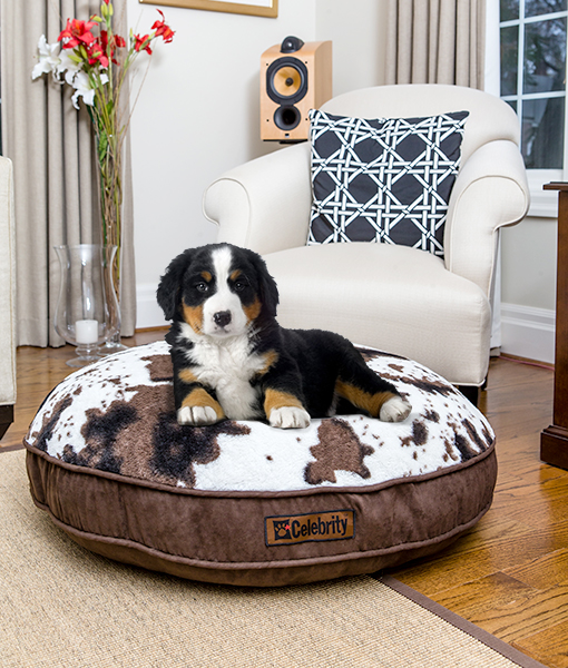 Memory Foam Dog Beds: High-End Orthopedic Pet Beds from P ...