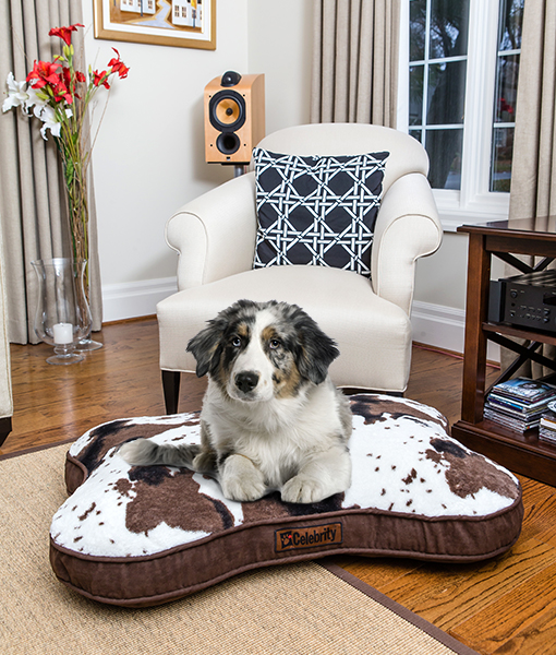 Shop Dog Beds & Blankets . Hollywood Feed | Your Local Pet ...